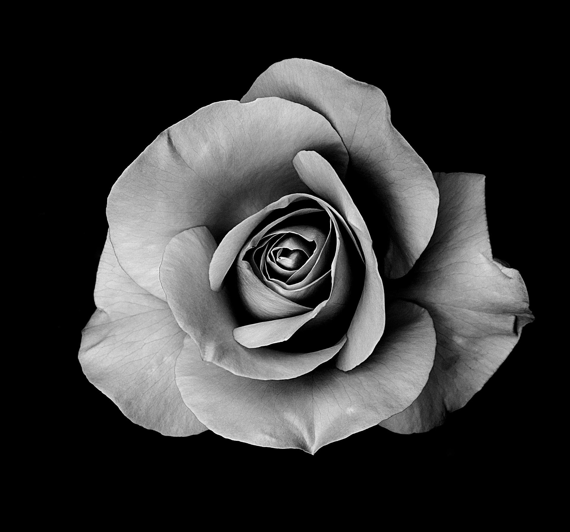 mooiste rouwbloemen